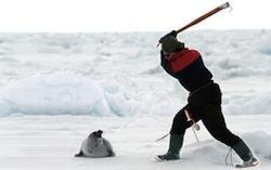 Seal_Hunt_Thumbnail