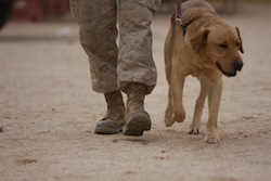 Dogs_and_Vets_Thumbnail2